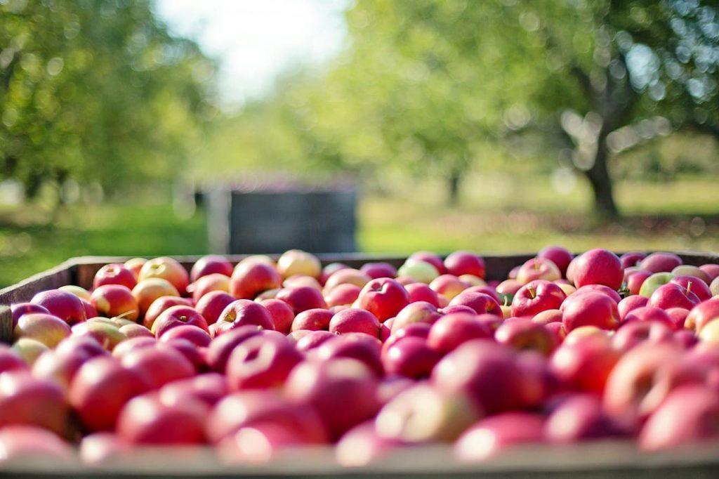 Äpfel mit künstlicher Intelligenz